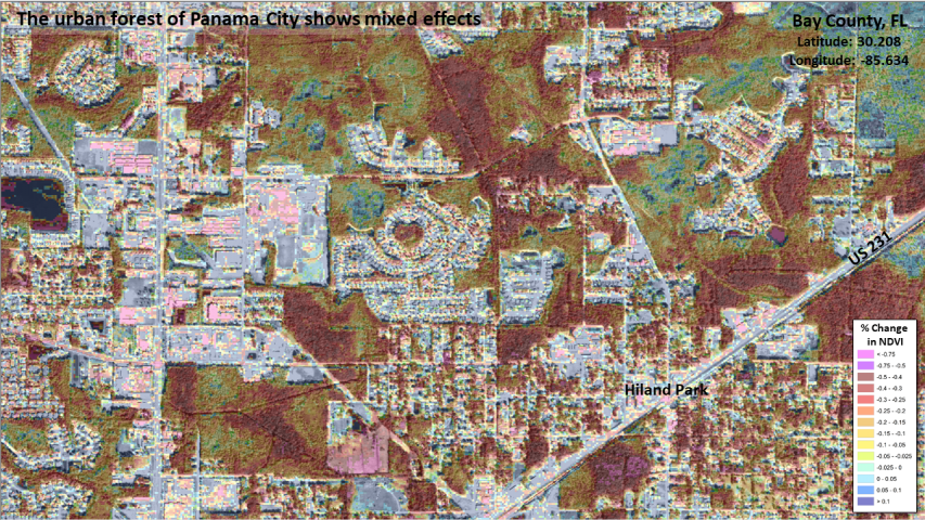 Urban forest damage in Panama City, FL