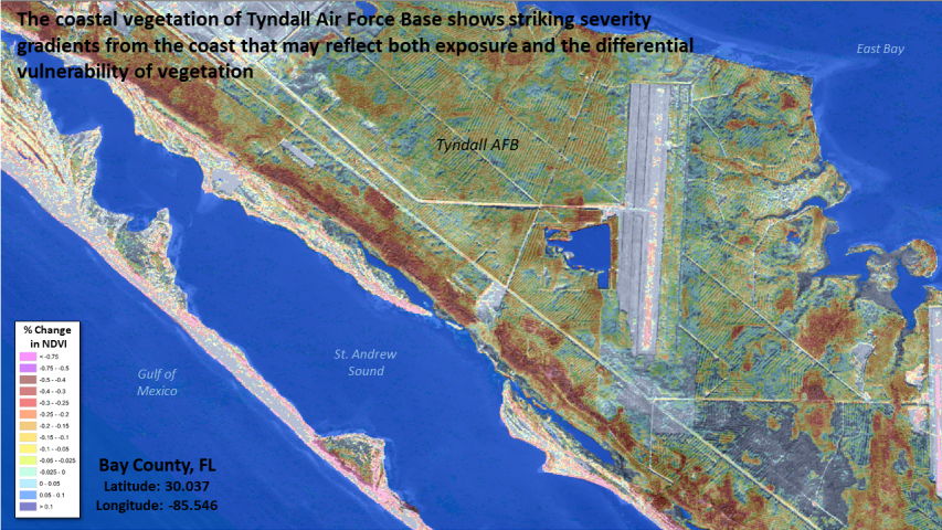 Coastal forest damage at Tyndall AFB