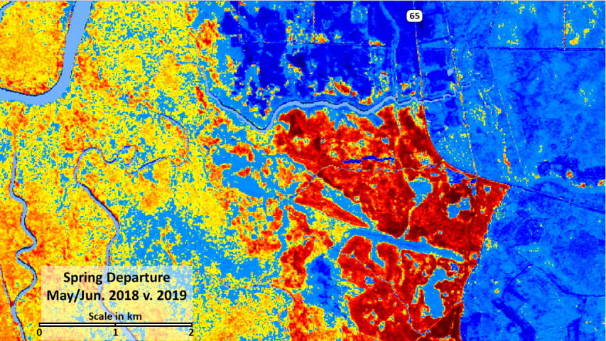 Spring departure in NDVI shows logging activity in red and delayed greenup on the Apalachicola bottoms.