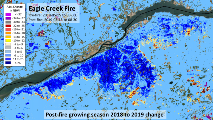 2017 Eagle Creek Fire, Oregon recovery and delayed mortality